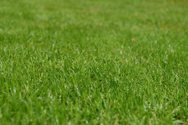 pisos para cobrir gramado